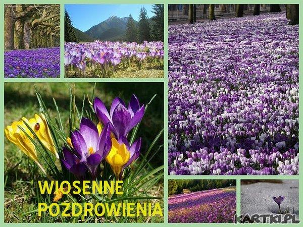 ekartki z kwiatkami